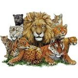 BIG CATS! БОЛЬШИЕ КОШКИ! Die Großkatzen!