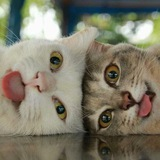 I'm a cat, mlem