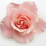 flower | Nature
