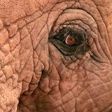 old_elephant   Unsorted